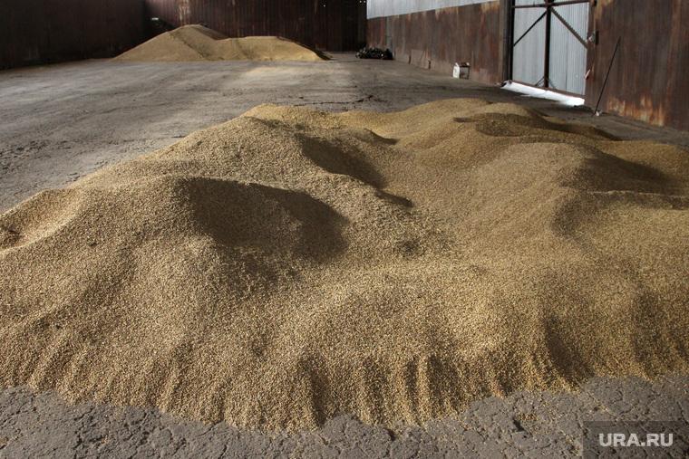 Алексей Кокорин в поляхКурганская область, урожай, зерно на складе