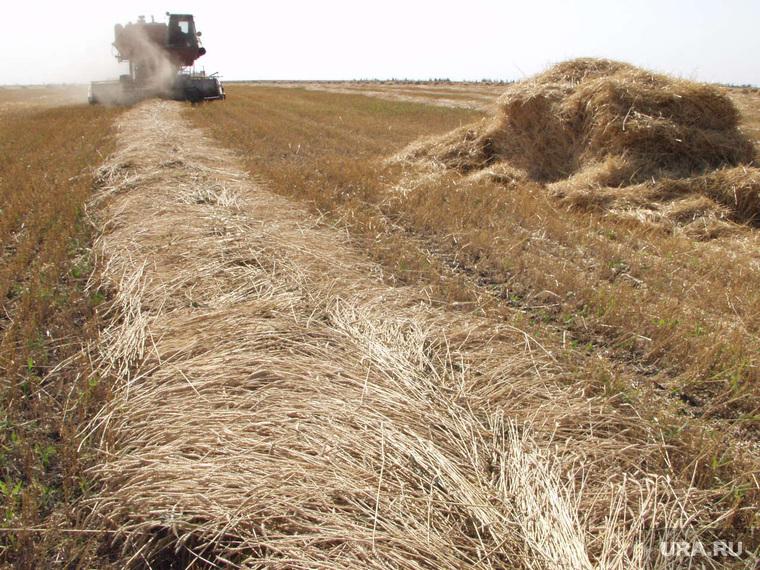 Клипарт. Екатеринбург, сельское хозяйство, поле, пшеница, уборка урожая