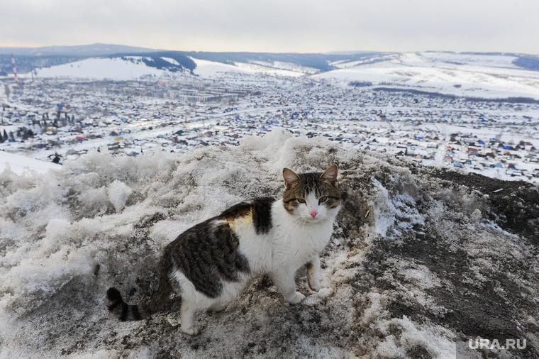 Подрыв льда в Аше перед половодьем. Обработано. Челябинск, кошка, горы, кот, панорама, сим