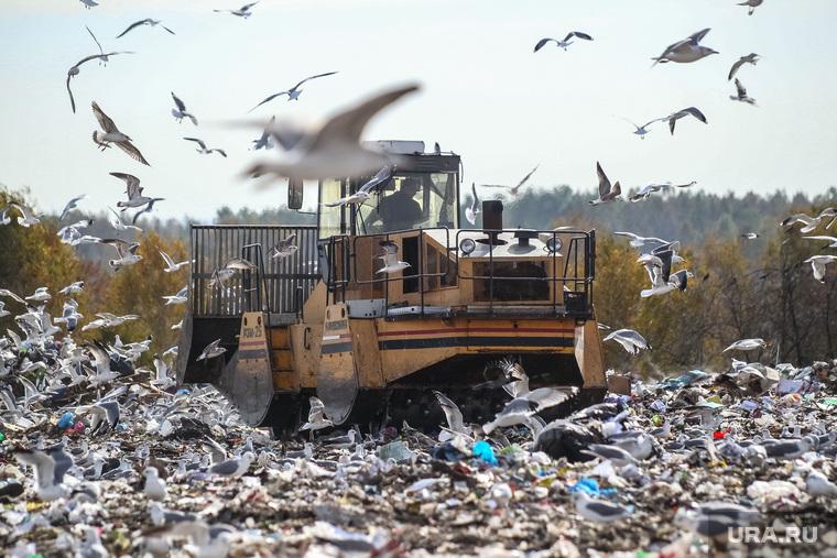 Проверка ОНФ и Общественной палатой Тюменской области полигона твердых бытовых отходов на Велижанском тракте. Тюмень, птицы, экология, отходы, полигон ТБО, мусор, свалка, чайки