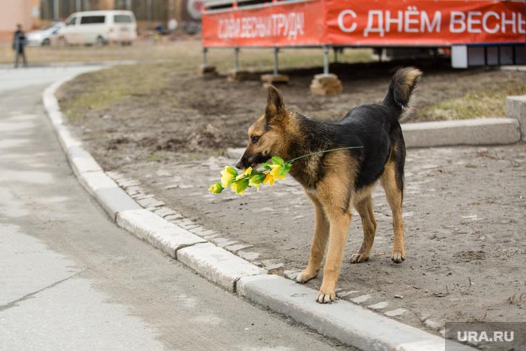 Первомайская демонстрация на проспекте Ленина. Сургут, букет, 1мая, демонстрация, с днем весны, собака с цветами
