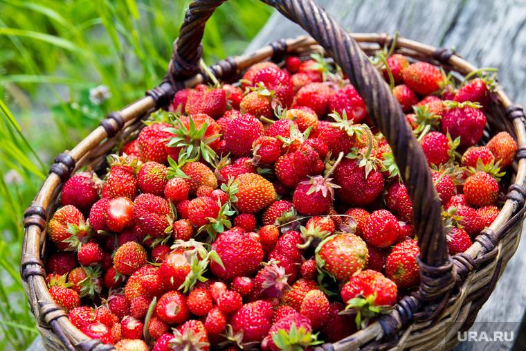 Дача и огород. Нижневартовск., корзина, ягоды, огород, клубника, дача