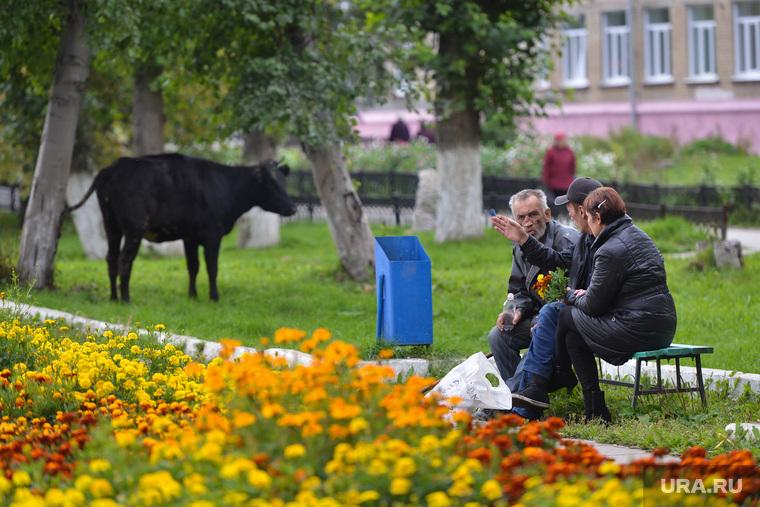Верхний Уфалей. Нижний Уфалей. Казаков Павел. Челябинск., бульвар, корова, верхний уфалей