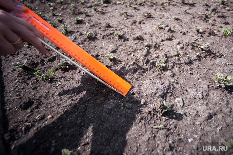 Замер губины земли на клумбах. Екатеринбург