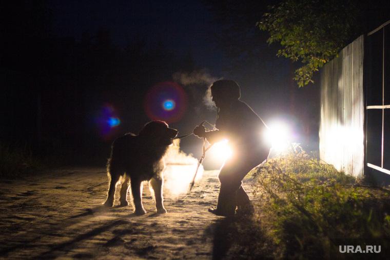 Клипарт Август. Нижневартовск., собака, друг, темнота, прогулка с собакой, вечер