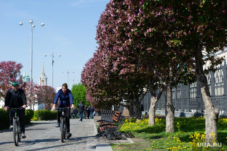 Виды Екатеринбурга, аллея, велосипедисты, проспект ленина