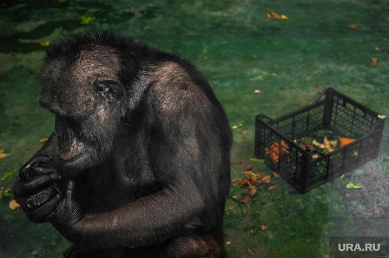Екатеринбургский зоопарк , зоопарк, обезьяна