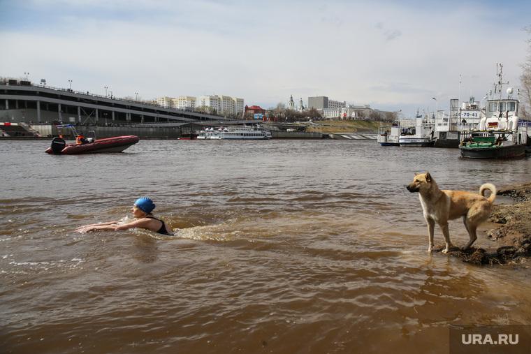 Заплыв моржей, посвященный Дню победы, Тюмень, река, Тура, собака, купание, вода, моржи
