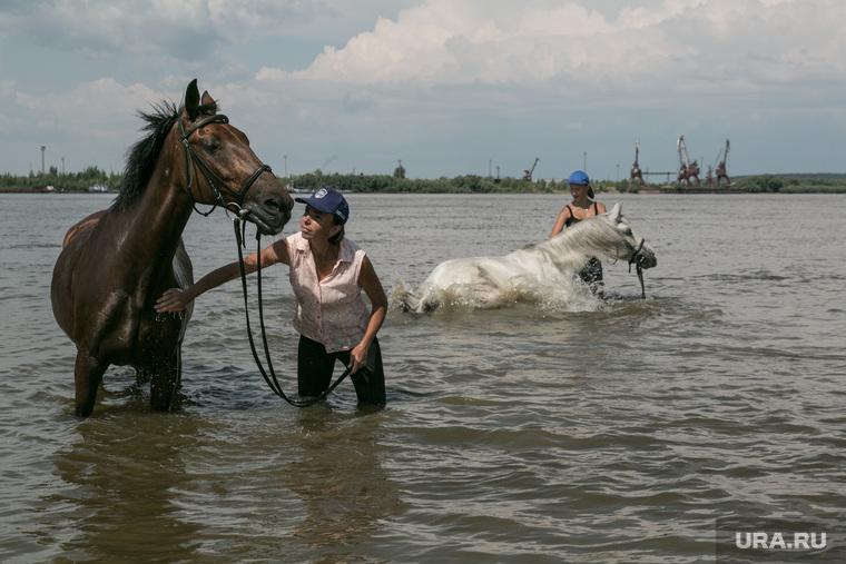 У реки Иртыш, Тобольск, Иртыш, купание коней, конь, река, вода