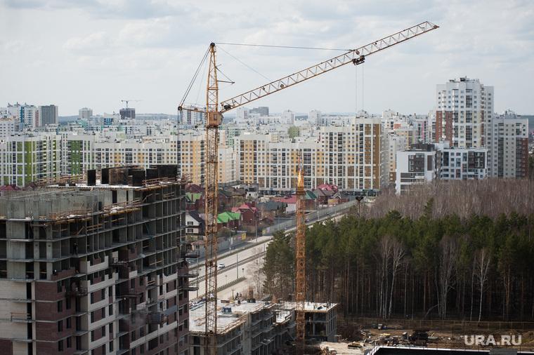 Березовая роща в микрорайоне Академический. Екатеринбург
