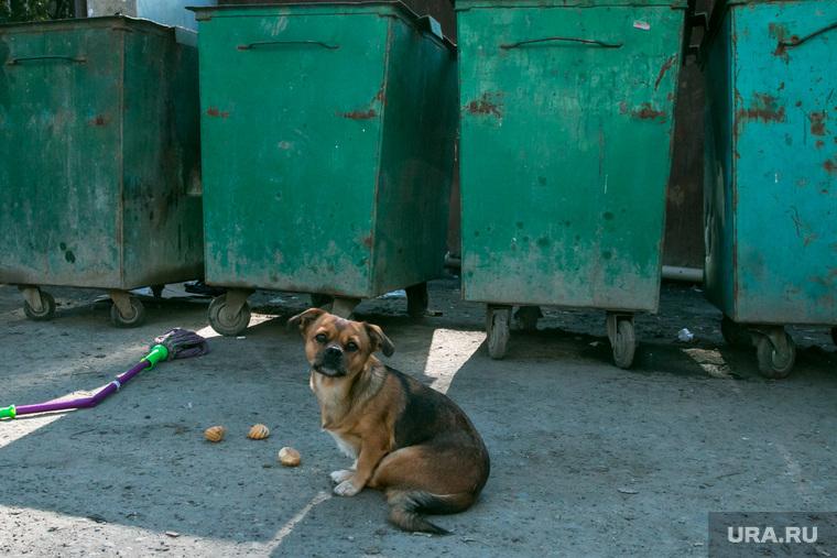 Бездомная собака. Курган
