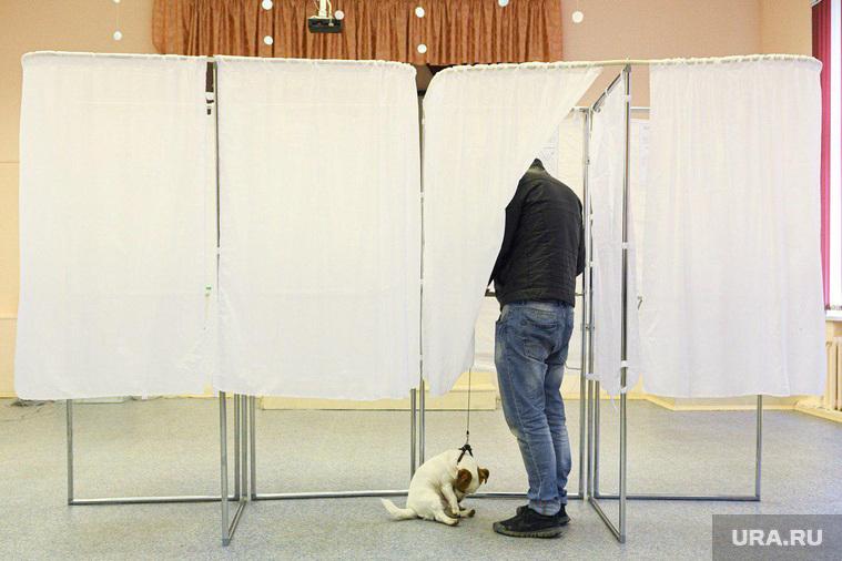 Пес на избирательном участке. Екатеринбург