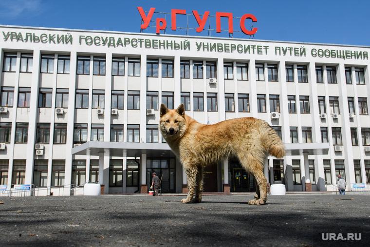 Сорок шестой день вынужденных выходных из-за ситуации с распространением коронавирусной инфекции CoVID-19. Екатеринбург
