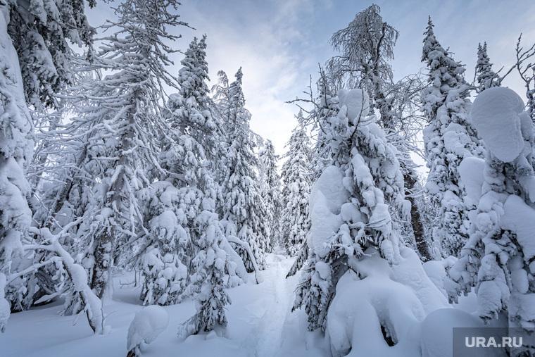 Зимняя природа. Урал