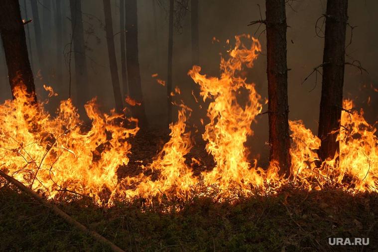 Рейд по лесным пожарам. Тюмень