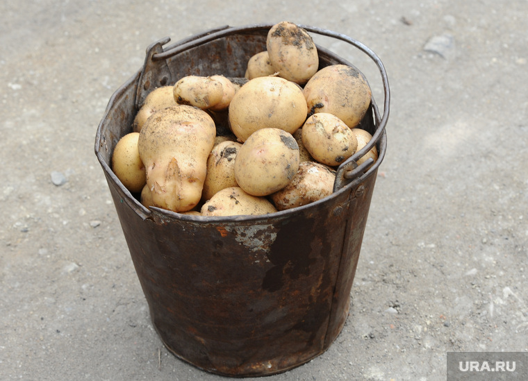 сон собирать в мешок картошку ряд такого