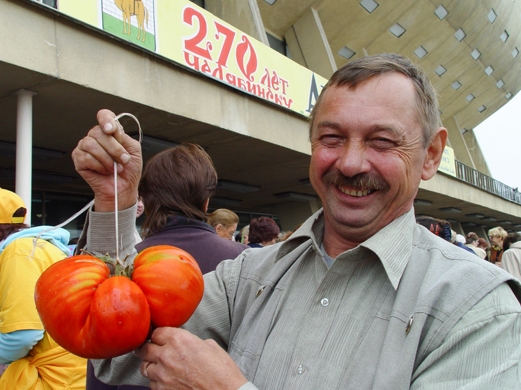 Купить семена старинных сортов томатов и перцев Томаты