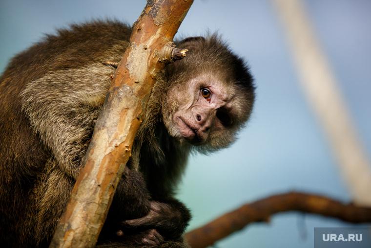 Ученые доказали пользу ревности на обезьянах