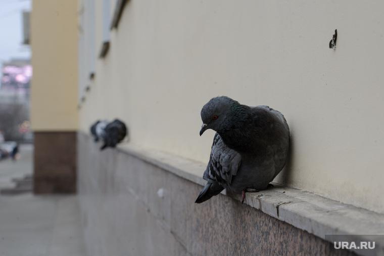 Дети прокатили мертвого голубя с горки. ВИДЕО