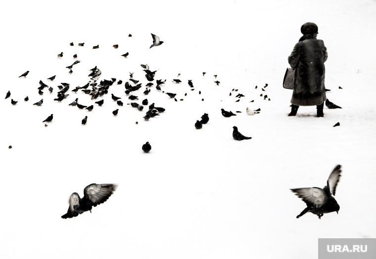 Голуби в парке. Екатеринбург, зима, голуби