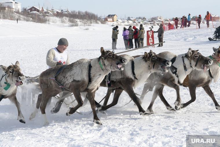 Тысячи туристов собрались на главный праздник Ямала. В Салехарде отмечают День оленевода. ФОТОРЕПОРТАЖ