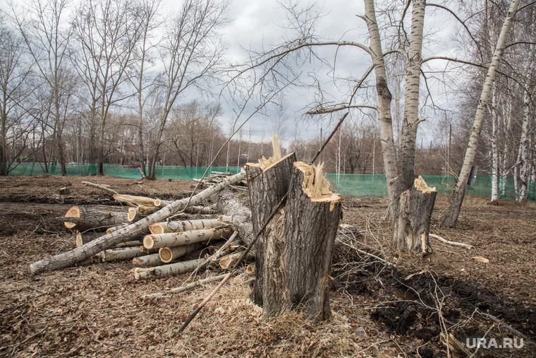 Вырубленный парк, на месте которого планируют построить бизнес-центр. Тюмень, спиленные деревья, пни