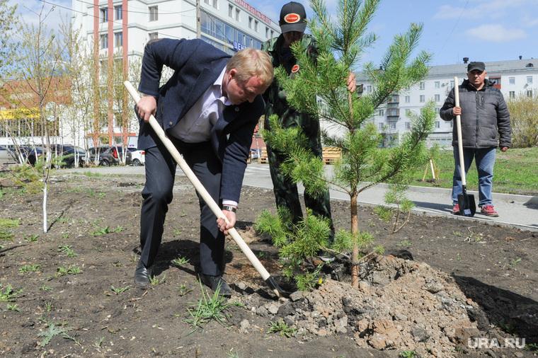 Высадка деревьев в Литературном сквере, возле Челябинской областной публичной библиотеки. Челябинск, дубровин олег, высадка сосны