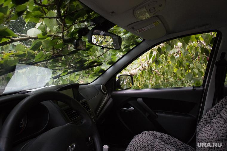 Упавшие деревья после урагана. Тюмень, упавшее дерево, ветки деревьев, дерево упало на машину