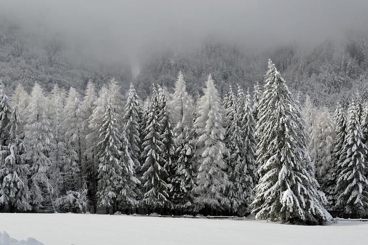 В пермском лесу насмерть замерзла женщина