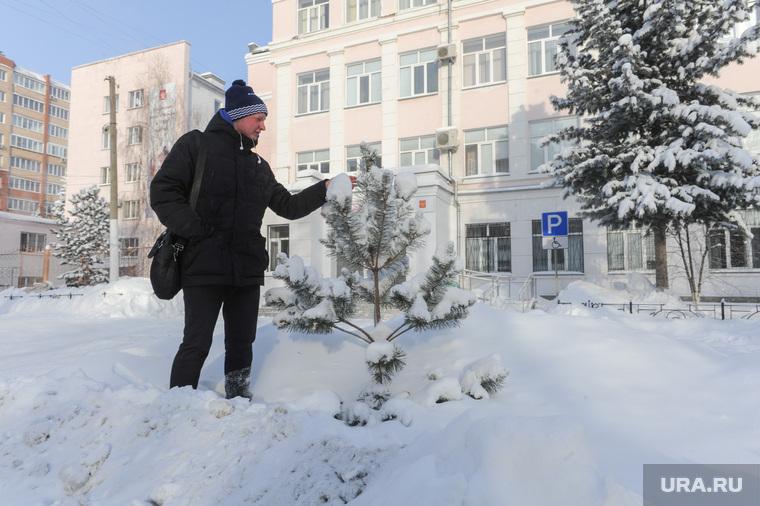 Деревья, которые посадил Децл, в 2014 году. Челябинск, сосна, пашкеев александр, государственный институт культуры