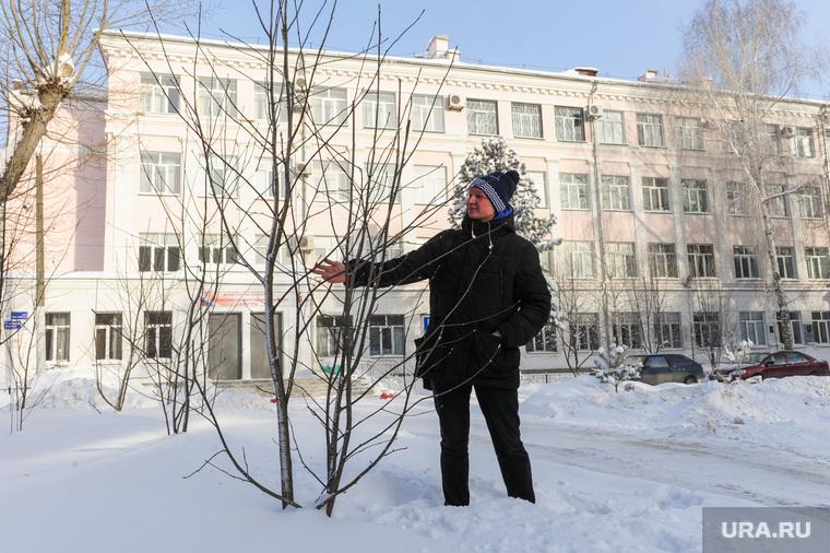 Деревья, которые посадил Децл, в 2014 году. Челябинск, рябина, пашкеев александр, государственный институт культуры