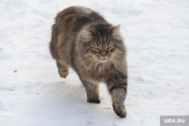 В Перми живодеры забирают животных «в добрые руки», оставляют их на улице и продают клетки