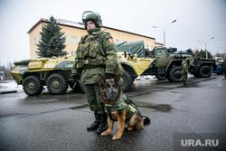 Однодневные сборы парламентариев и прессы в 21 бригаде Росгвардии. Москва, служебная собака, вежливые люди, росгвардия, овчарка