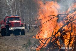 Пресс-конференция МЧСКурган, пожар, огонь, лес горит