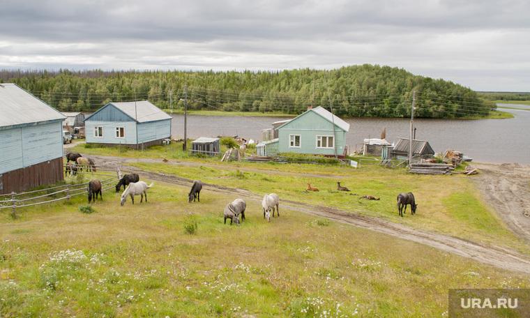 Поселок Пельвож, отдаленный район Салехарда. ЯНАО, лошади, деревня, поселок, пельвож