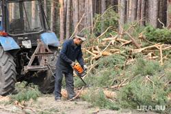 Вырубка лесаКГСХА Курганская область, вырубка леса, распилка дерева
