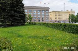 Одуванчики перед городской администрацией. Челябинск, одуванчики, сорняки, не стриженый газон