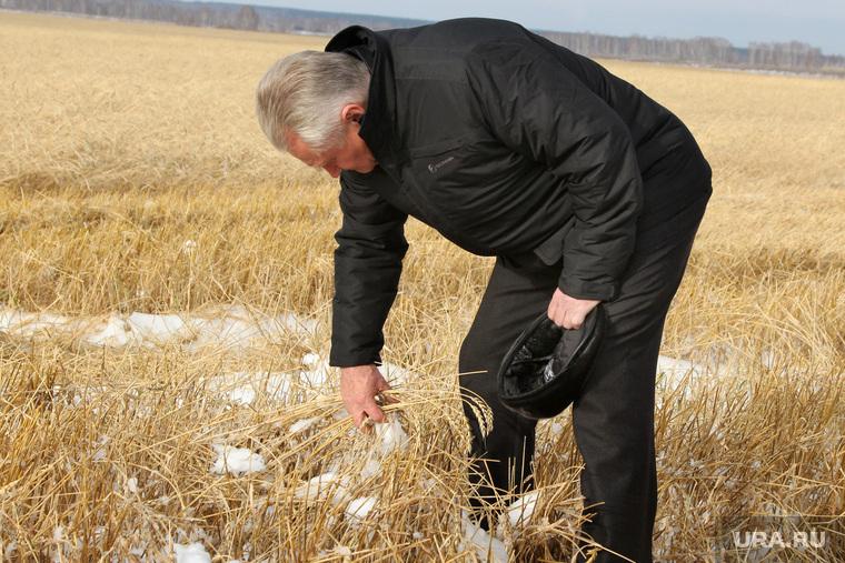 Алексей Кокорин в полях Курганская область, жданов сергей, пшеница