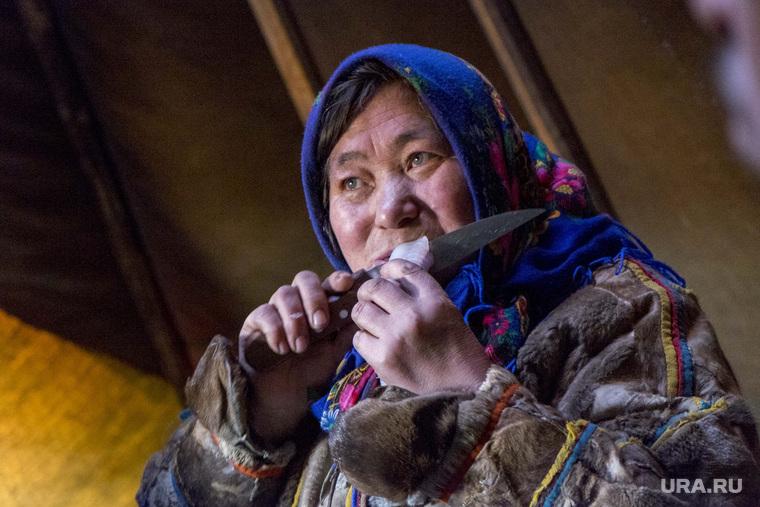 Ямальский район, Яр-Сале, оленеводы, кмнс, абориген, ненцы