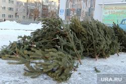 Подготовка к Новому году, продажа елокКурган, елки
