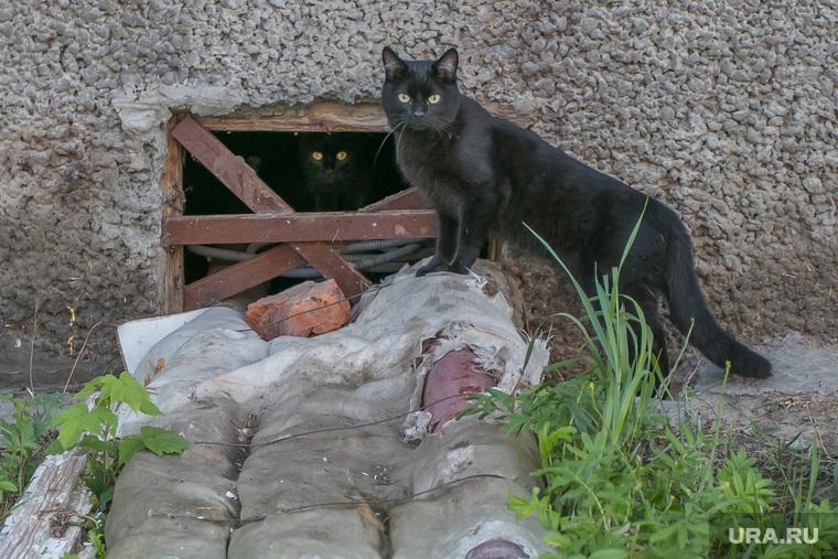 Разное. Курган, окно в подвал, черные кошки