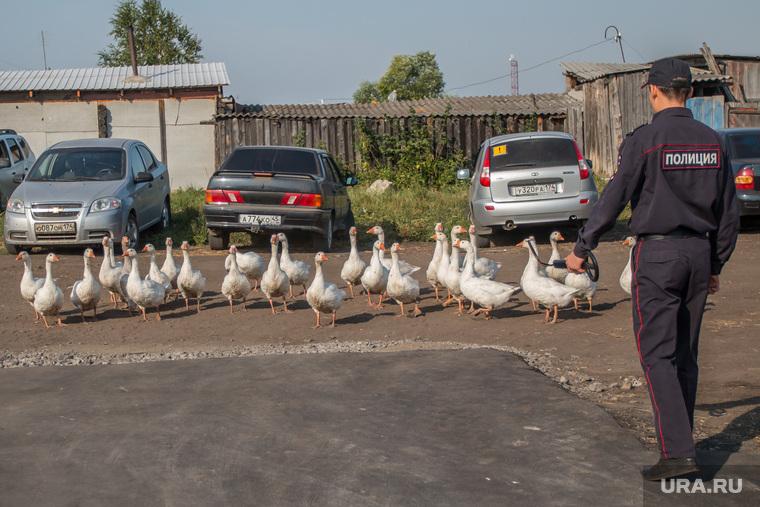 Рабочий визит Виктора Зубкова в село Мартыновка Курганской области, полицейский, гуси