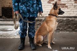 Следственный изолятор №1 (СИЗО). Екатеринбург, кинолог, пес, служебная собака, собака, полиция, кинологическая служба, полицейская собака