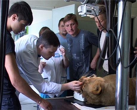 В Кургане специалисты Центра Илизарова удалили трехлетней циркачке гигантский звериный клык