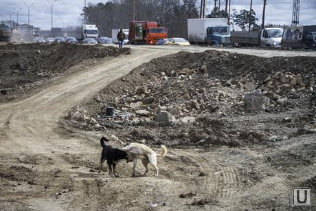 Поездка с Силиным по программе Столица, ремонт дороги, строительство екад, дорожные работы, дорожный знак, собаки
