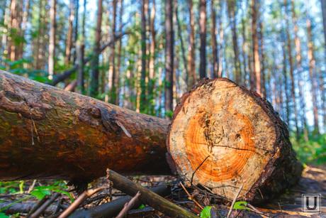 Рабочая поездка по городу. Екатеринбург, дрова, деревья, бревна, лес рубят, вырубка леса