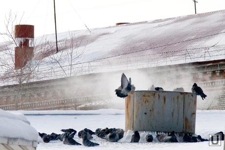 Мороз Курган, снег, голуби, мороз, зима, птицы