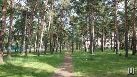 Клипарт. Челябинск. Парк Гагарина, деревья, парк, лиственницы