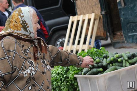 Открытие овощной ярмарки Курган, покупатель, овощная ярмарка
