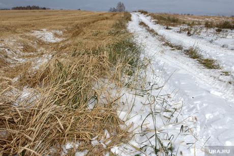 Алексей Кокорин в полях Курганская область, пшеница в снегу